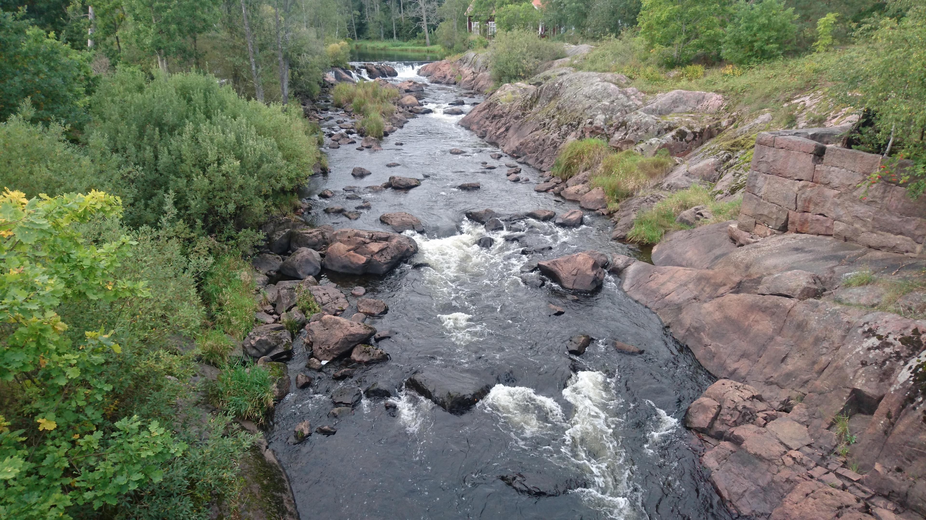 Naturfåran i Högsby